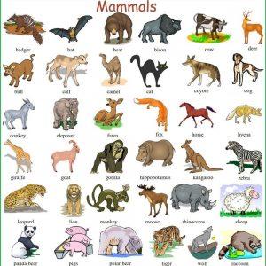 Trọn Bộ Từ Vựng Tiếng Anh Về Các Loài Vật Trong Tự Nhiên